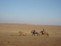 Scaledsu2chasinghorses